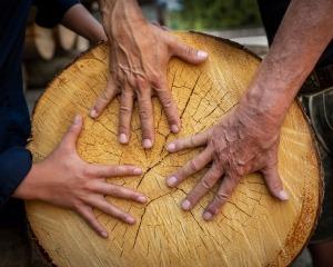 Kraftholz - Gespür für Mensch und Natur