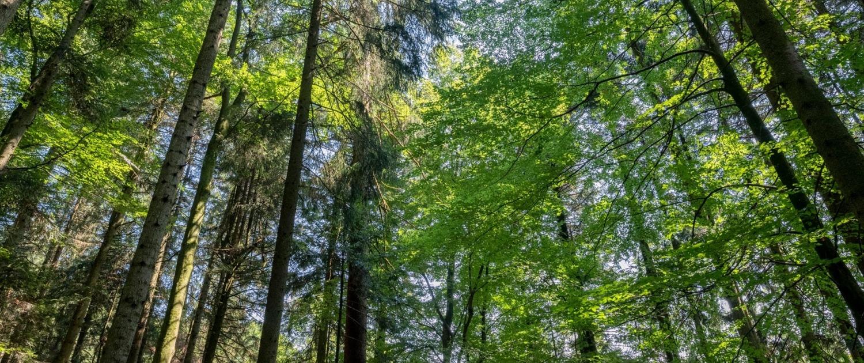 Kraftholz - Wald